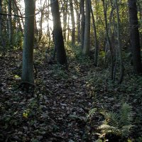 a picture of a temperate woodland soil