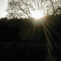 Bright sun over woodland